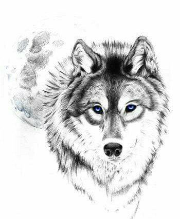 Hành trình cô độc của sói bóp nghẹt trái tim độc giả
