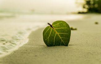 7 sở thích cá nhân có ảnh hưởng tích cực đến cuộc sống  và công việc